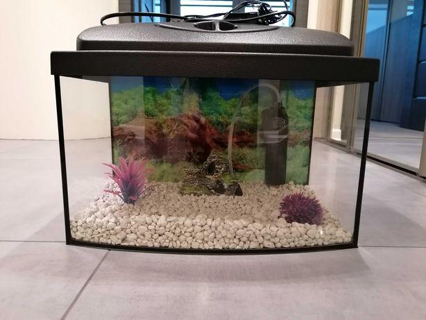 Akwarium 25l z calym wyposażeniem