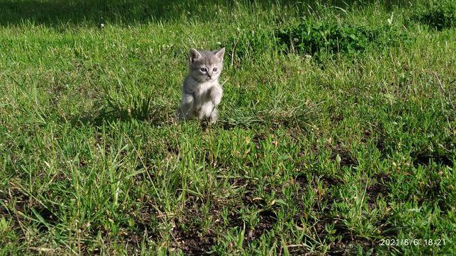 Кошеня, дівчинка