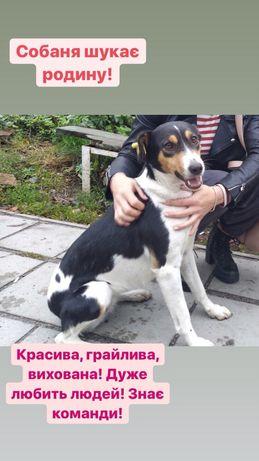 Собака щенок пес