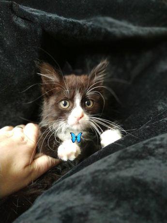 Шикарный котик ищет дом‼️