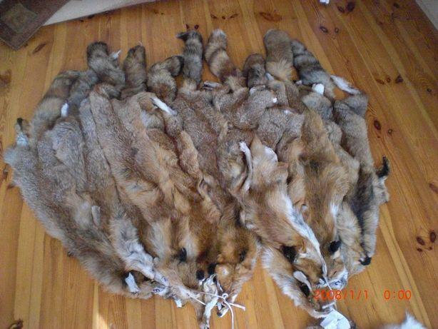 skóry z lisów rudych prawdziwe lisie skórki futro skóra