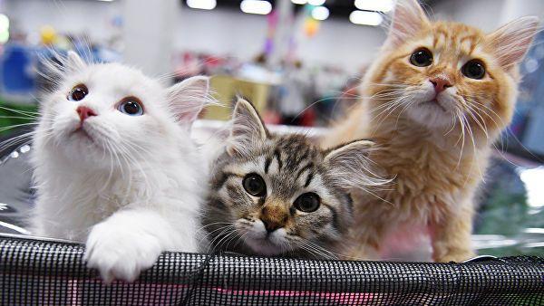 Шикарные котята в добрые руки