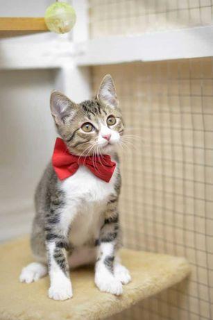 отдам котенка,  мальчик,3 месяца