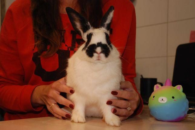 Карликовые декоративные кролики - подростки и взрослые