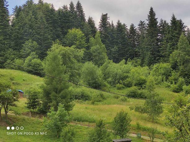 Działka rolna z lasem 1.56 ha