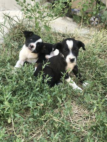 Щенята ищут дом мальчик и девочка  щенок собака