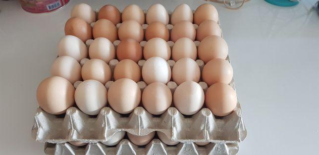 Jajka Wiejskie Dowiozę