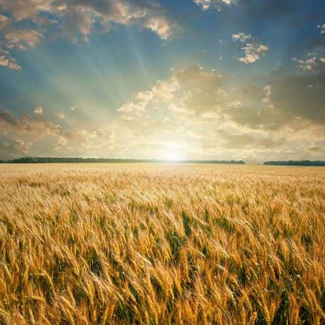 Сделки с земельными участками сельхоз назначения