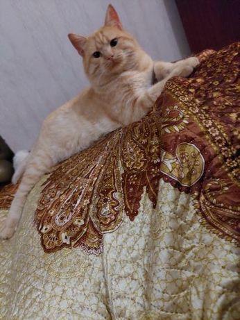Отдам рыжего кота, кастрирован, 3 года