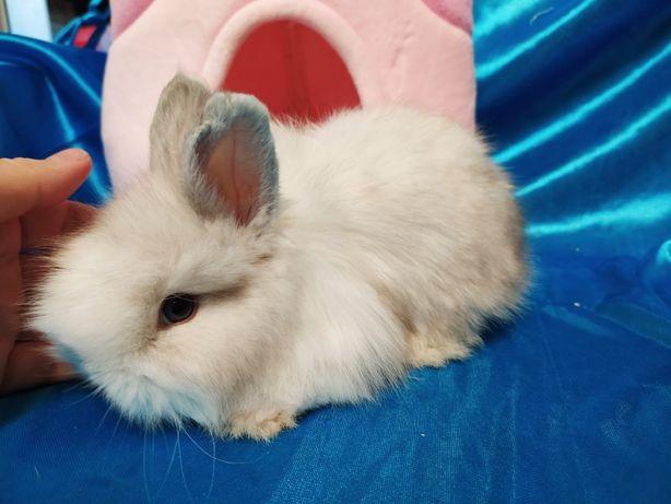 Ручные добрые кролики. Разного окраса и пола.