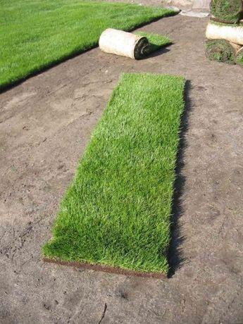Trawa z rolki w rolkach rolowana trawnik