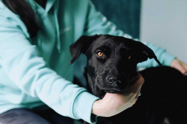 Юная черная собака бесплатно