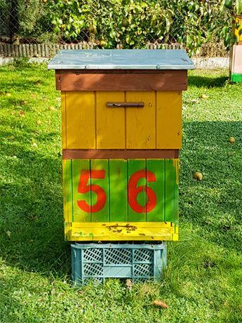 Pszczoły pszczoly rodziny pszczele dadant i wielkopolskie z ulami, ule