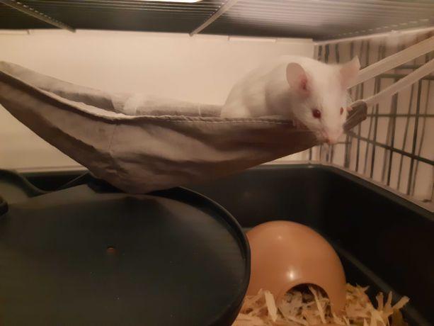 Oddam w dobre ręce samca myszy i odsprzedam klatkę!