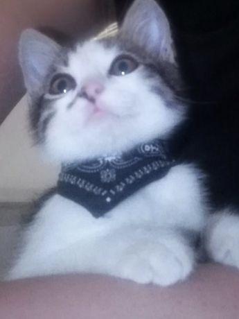 Отдам котенка Тимошу