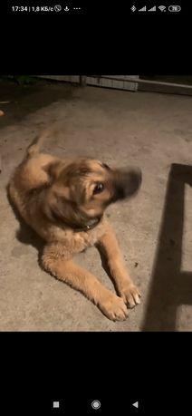 Пропала найдена собака по ул. Богдана Хмельницкого