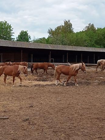 Кони лошади  жеребята
