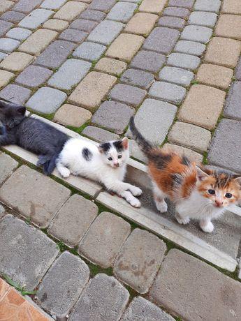 Віддам маленьких кошенят