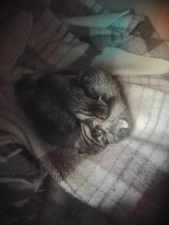 Małe kotki za darmo