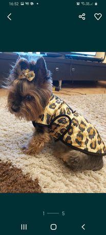 Ubranko bluza dla pieska psa yorka