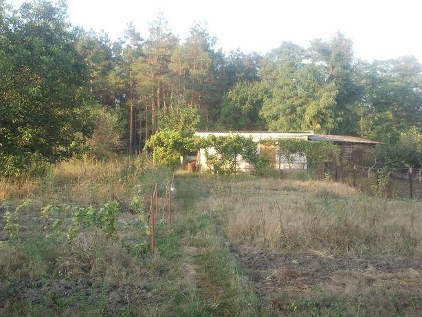 Дом 8х11 Александрия Сосновый лес в огороде
