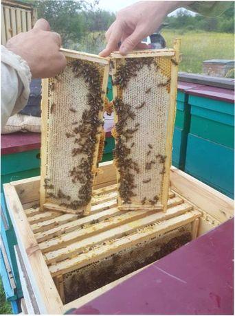Спешите! Матка пчелиная. Плідні. Бджоломатки.