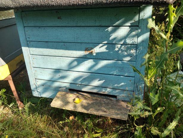Pszczoły rodzina pszczela
