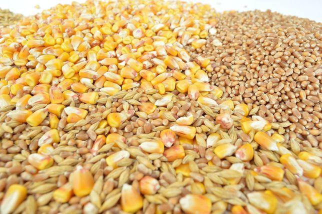 Продам пшениця зерно