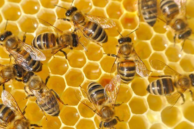 Воск пчелиный натуральный обмен