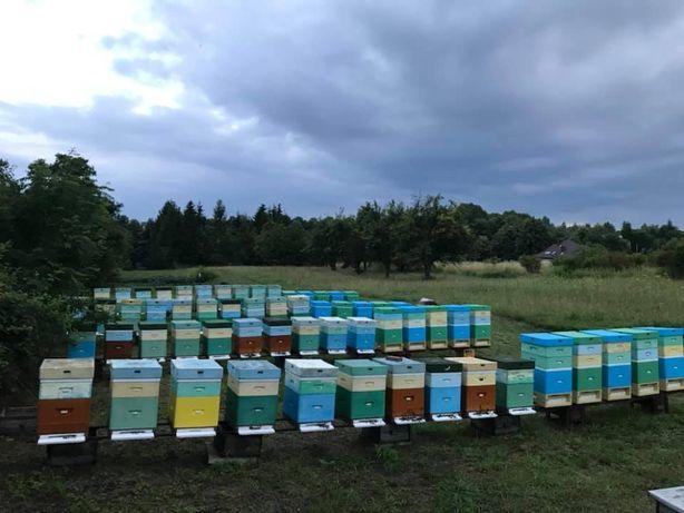 Czy TY juz znasz nasze Naturalne Poslkie Miody,Pyłek Pszczeli/Kwiatowy