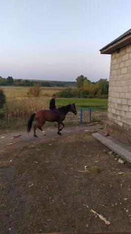 Лошадь работящая