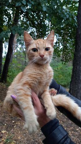 Найден котенок 4 мес. в парке Сосновый бор! Кто потерял???