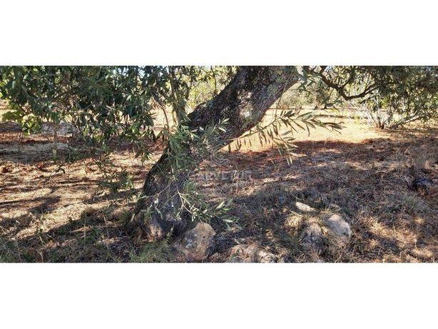 Terreno rústico, em zona agrícola, Ribeira de Alte, Pader...