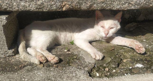 Gato jovem cruelmente abandonado