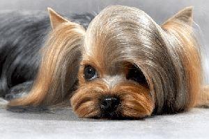 Стрижка собак/груминг