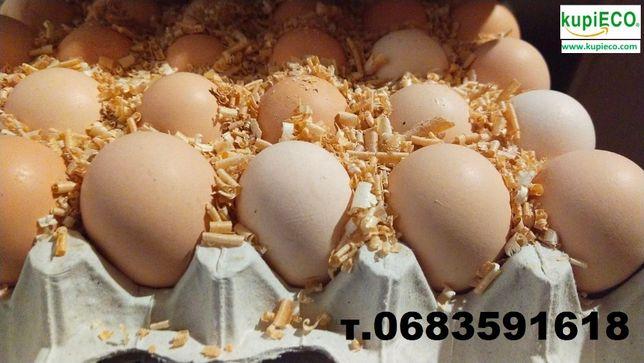 Яйца инкубационные с доставкой