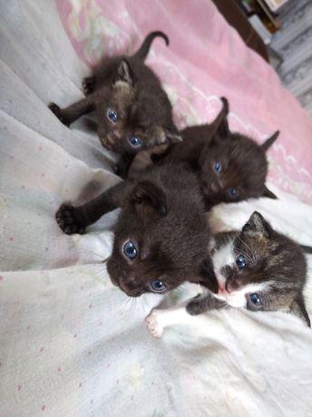 Маленькие котятки, мальчики и девочки