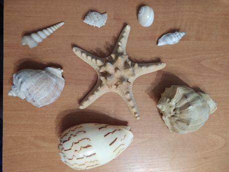 Морские ракушки, звезда.