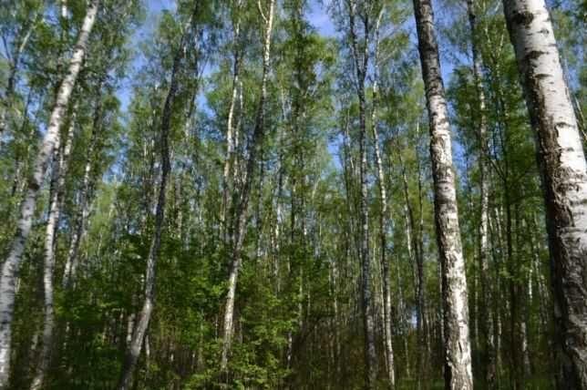 Сдается домик Мощун, 6 км от Пуща-Водицы.