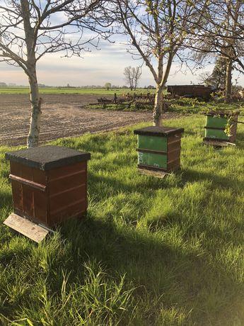 Rodzina rodziny pszczela ramka warszawska.