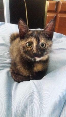 девочка котеечка 1,5-2 мес.