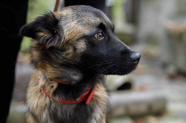 Неймовірна собака Міра. Терміново шукає дім Львів. Візьму Собаку