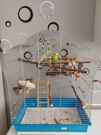 Papugi faliste z dużą klatką sprzedam