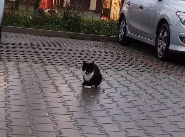 Poszukiwany właściciel lub nowy domek dla młodego kociaka-Stargard