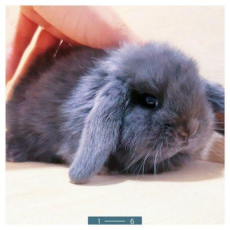 Карликовые миниатюрные декоративные торчеухие и вислоухие кролики