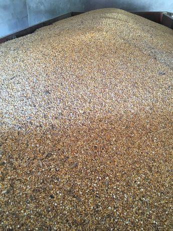 Kukurydza ziarno sucha zboze z dowozem