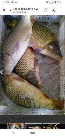 Продаж жива риба