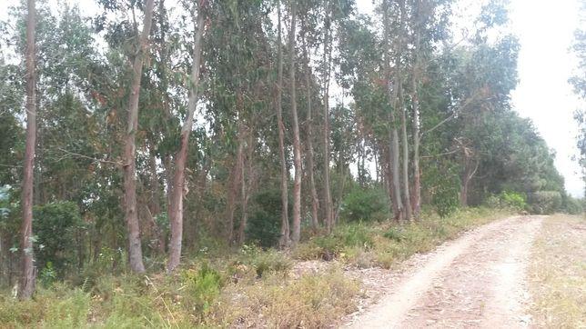 Terreno situado a norte do concelho de Alenquer