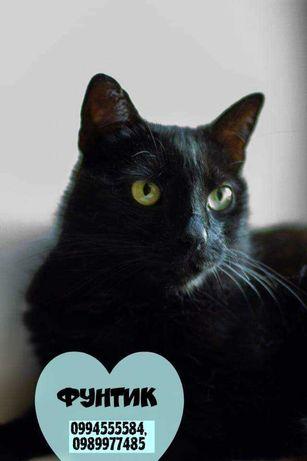 Чёрные котики, кот, кошка, в добрые ручки!!