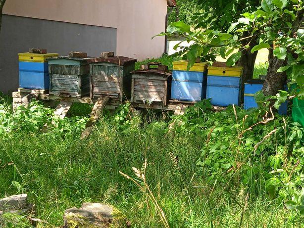 Sprzedam ule z pszczołami Pszczoły Ule Rodziny Pszczele